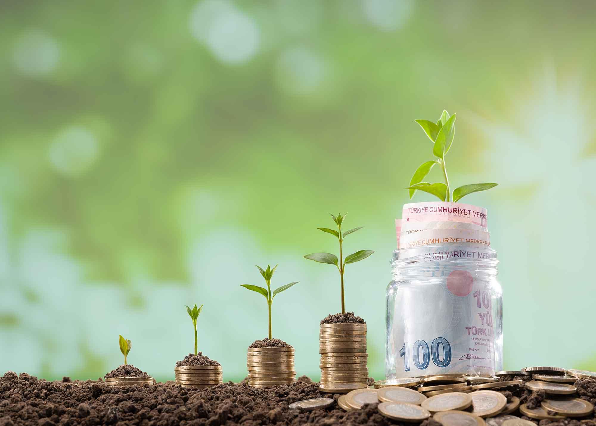 صورة تحوي نقود ونباتات خضراء تدل في معناها على الزكاة